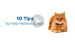 10 Tips to Relieve Cat Stress
