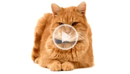 10 tips for reducing stress in cats